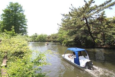 石神井池 南側は木立が多く、傾斜地となっているが、北側は開放的な遊歩道となっている。
