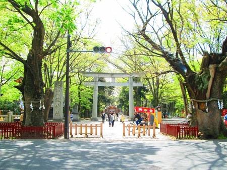大国魂神社も府中駅徒歩圏にあり緑が沢山です。