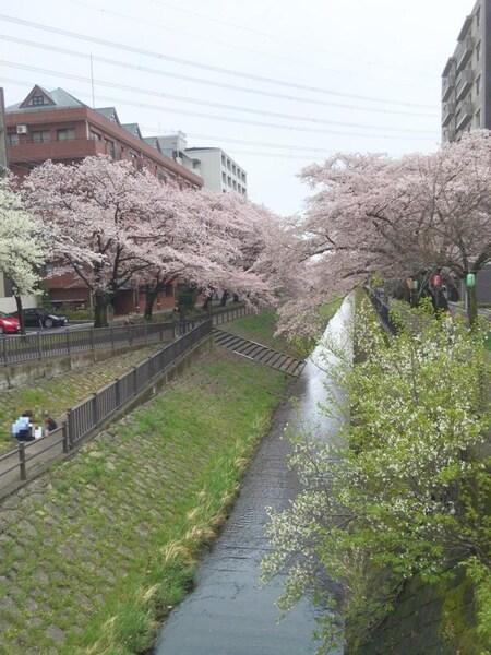 3月の桜です☆