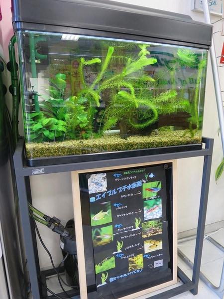 当店自慢の熱帯魚です。お子様にも大人気!