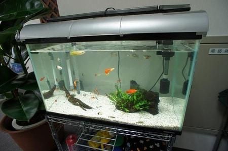 最近大量購入致しました。熱帯魚好きなお客様からもおほめのお言葉頂きました!